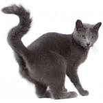 Для кастрированных кошек