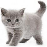 Котята (до 1года)