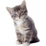 Котята (до 1года)/Беременные