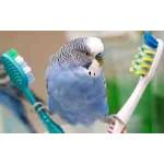 Средства по уходу за птицами